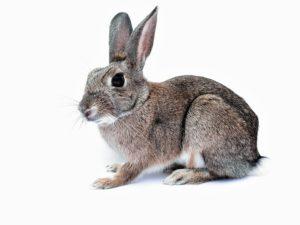 kaninchen profi