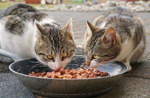 Welches Katzenfutter soll ich kaufen?
